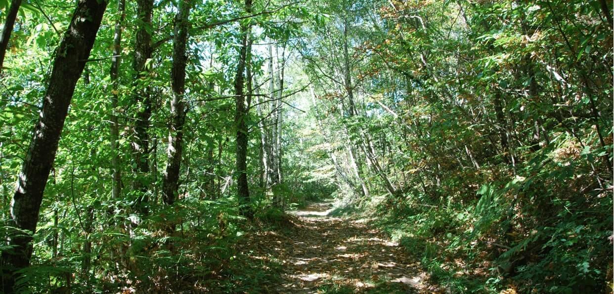 Préserver la diversité de la forêt française