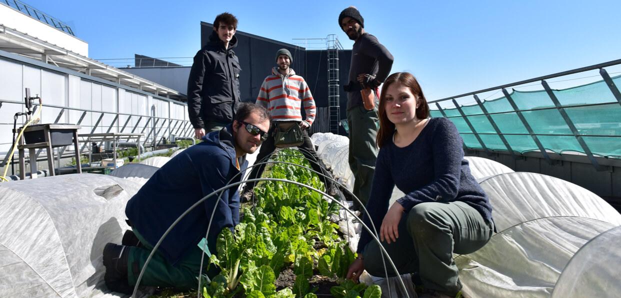 CultiCime : Insérer des personnes loin de l'emploi à Aubervilliers sur une activité de maraîchage écologique sur toiture.