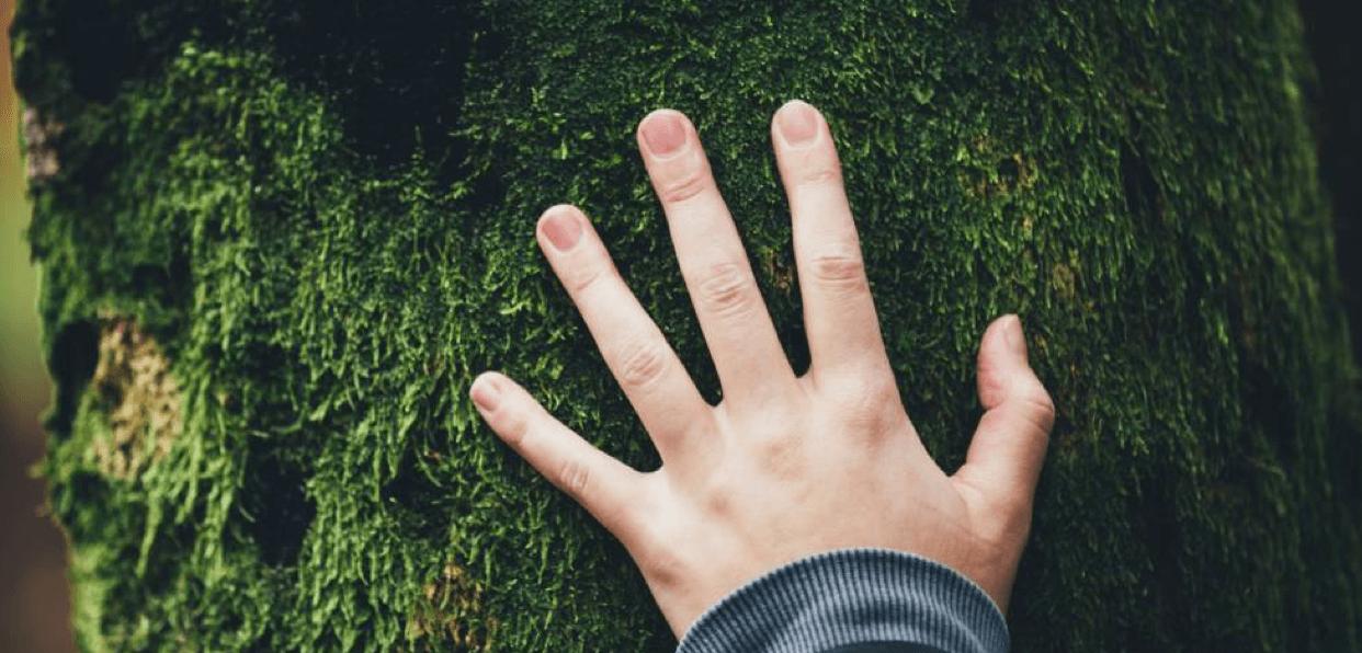 Agir pour préserver la nature en réhabilitant les écosystèmes