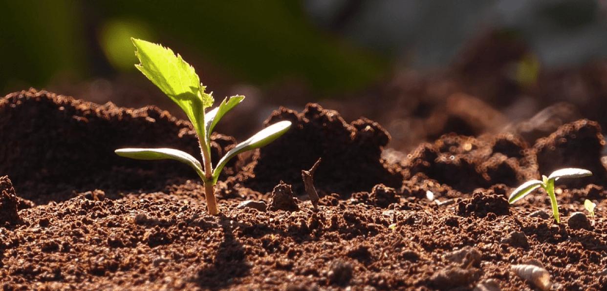 Installer une forêt jardinée chez une jeune maraichère dans l'Hérault